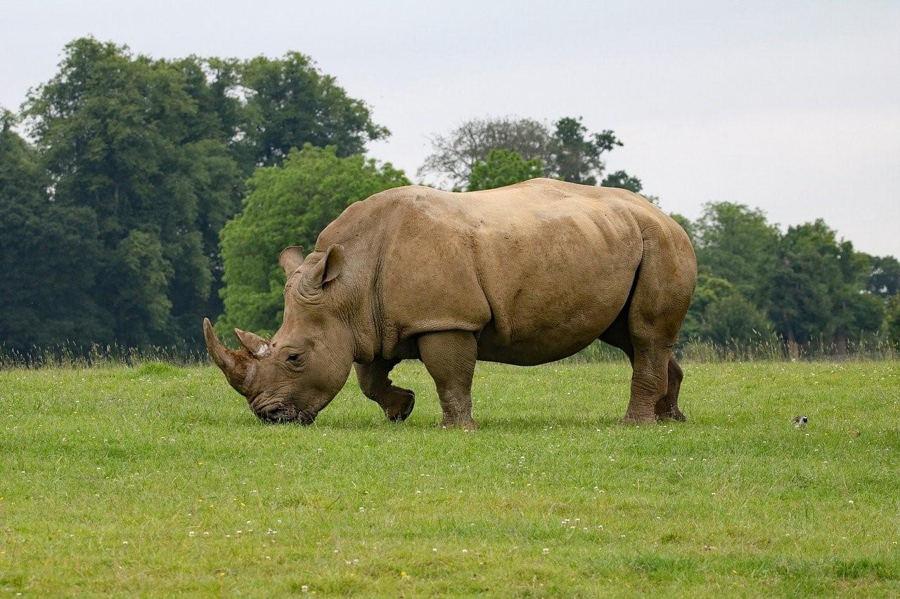 Emile Ouosso et les associations protectrices de la faune en Afrique